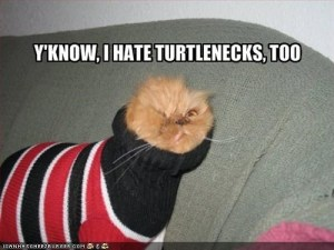 I can totally relate to this cat