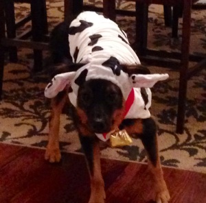 Our other dog Levi, thoroughly enjoyed his costume